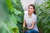 foto of cucumber  - Happy Young woman holding and eating cucumbers in a hothouse cultivated with green fresh cucumber plants - JPG