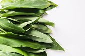 stock photo of ram  - Bunch of Fresh Green Rams Onion or Ramsoms A big ingredient in the New Nordic Culinary Arts and cuisine - JPG