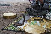 picture of cobra  - Cobra dancing at famous Marrakesh square - JPG