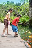 foto of fish pond  - Young boy with sister feeding the koi carp fish in the ornamental pond - JPG
