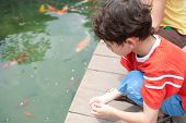 foto of fish pond  - Young boy with sister feeding ornamental koi carp fish in a pond - JPG