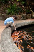 stock photo of catch fish  - Young boy enjoying a day catching and feeding fish in pond - JPG