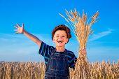 pic of fall-wheat  - Happy farmer