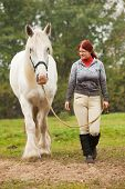 stock photo of shire horse  - Woman with big white shire horse in pasture - JPG