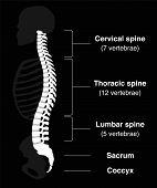 Backbone Black poster