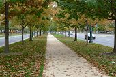 Постер, плакат: Fall Foliage in Philadelphia