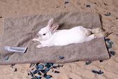 foto of easter bunnies  - Cute White Rabbit lying on the beach - JPG