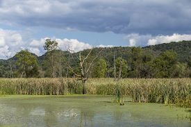 pic of cattail  - A swamp with trees and cattails in a valley - JPG