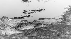 image of inverted  - Black and White Meadow Art Concept - JPG