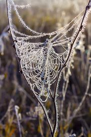 foto of novosibirsk  - The first frost. Cobwebs on the grass covered with frost. Russia,Siberia,Novosibirsk region,Kolyvan district, coast of the river Chaus ** Note: Shallow depth of field - JPG