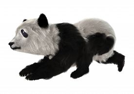 stock photo of panda bear  - 3D digital render of a panda bear cub isolated on white background - JPG