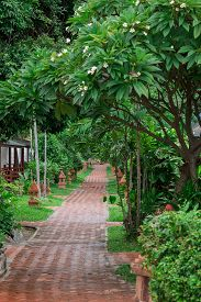 picture of garden eden  - The tropical garden with palm trees and road - JPG