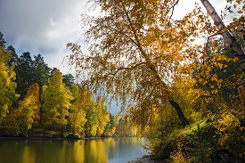 picture of novosibirsk  - Autumn landscape with yellow birches on the river - JPG