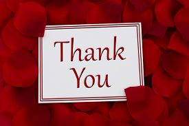image of pedal  - Thank You Card A white card with text Thank You and a red rose pedal backgrounds - JPG