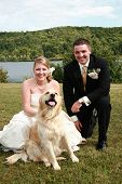stock photo of wedding couple  - Bride and groom taking a wedding portrait with their pet golden retriever - JPG