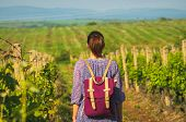 Traveler Girl Walking Through Vineyards. Young Girl Traveler Walking In Nature. Traveler With Backpa poster