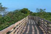 Dense Green Foliage Surrounding This Boardwalk Along The Coastline In Keansburg Monmouth County New  poster