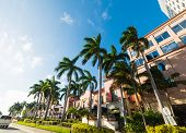 Palm Trees And Elegant Buildings In West Palm Beach. Florida, Usa poster