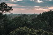 View On The Amazon Rainforest During Sunset In Peru poster