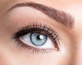 foto of eyebrow  - Beauty female blue eye with curl long false eyelashes  - JPG