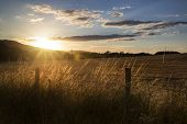 Beautiful Summer Landscape Of Sun Backlighting Field In Countryside