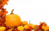 pic of gourds  - Autumn corner border or frame with leaves and pumpkins - JPG