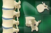 image of lumbar spine  - Digital illustration of human spine in colour background - JPG