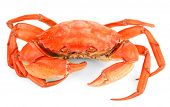 image of crab  - Boiled crab isolated on white - JPG