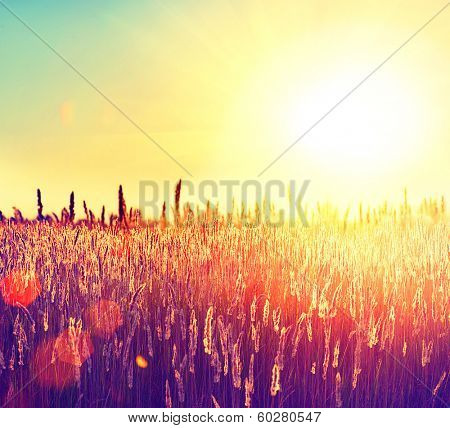 Field. Beautiful Nature Sunset Landscape. Sun. Rural Landscape under Shining Sunlight   poster
