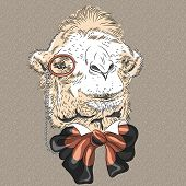 stock photo of camel  - sketch closeup portrait of funny Camel hipster in brown glasses and bowtie - JPG
