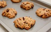 stock photo of pecan  - Freshly baked chocolate chunk and pecan nut cookies on a cookie sheet - JPG