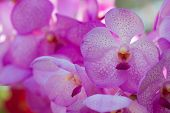 foto of orquidea  - Collection of orchid flower on green back ground - JPG
