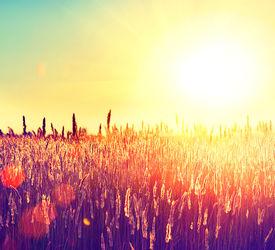 foto of farm landscape  - Field - JPG