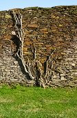 foto of shale  - Roots and branches of a plant grown and clinging to a shale stone wall over green grass - JPG