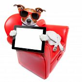 stock photo of couch potato  - dog holding a blank and empty tablet pc computer on a red fancy funny sofa resting and relaxing - JPG