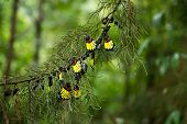 image of cocoon tree  - Beautiful and colorful butterfly come out from cover - JPG
