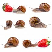 image of garden snail  - various creeping garden snails isolated on white background - JPG