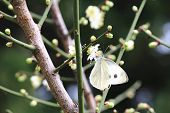 stock photo of butterfly flowers  - Plum flower and butterfly - JPG