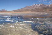 stock photo of eduardo avaroa  - Beautiful landscape with Flamingos in lagoon of Salar de Uyuni, Bolivia ** Note: Soft Focus at 100%, best at smaller sizes - JPG