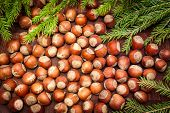 pic of hazelnut tree  - nuts on  wooden background with Christmas tree - JPG