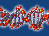 image of biomolecule  - The double helix structure of the DNA - JPG