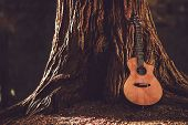 image of guitar  - Acoustic Guitar and the Old Tree - JPG