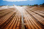 foto of farm land  - California Agriculture - JPG