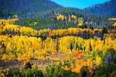 pic of october  - Colorful Colorado Autumn - JPG
