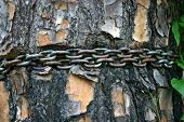 Chain Around Tree