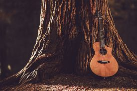 image of string instrument  - Acoustic Guitar and the Old Tree - JPG