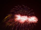picture of night-blooming  - spectacular beautiful bright fireworks a fiery red - JPG