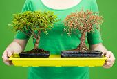 image of bonsai  - Woman holding two bonsais one death and the other alife Environment ecology and sustainable resources concepts