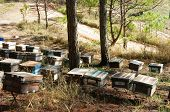 stock photo of beehive  - Beekeeping at Vietnam Vietnamese agriculture group of bee tank group of beehive in Dalat jungle honey is nutrition eating bee working at bee nest - JPG