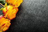 pic of yellow rose  - Rose - JPG